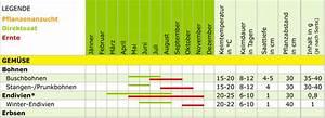 Kartoffel Aussaat Kalender : aussaatkalender samen maier ~ Whattoseeinmadrid.com Haus und Dekorationen