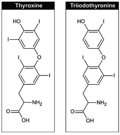 thyroxine t4 normal range salt and your iq mapping ignorance