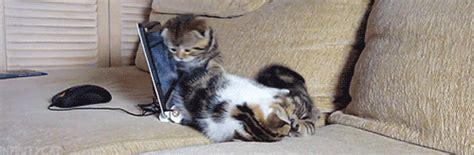 le canapé gif sur yvette canapé petit photos de chats