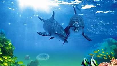 Fish Wallpapers Desktop Backgrounds Sea Animals Computer