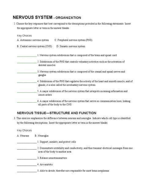 ap coloring nervous worksheet  nervous system