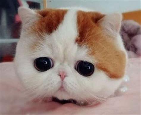 dp kucing lucu ngegemessin gambar animasi gif swf dp bbm animasi bergerak