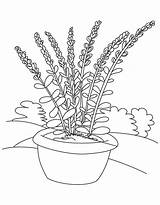 Lavender Flower Pot Coloring Pages Drawing Flowers Printable Plant Adults Pots Bestcoloringpages Sheets Getdrawings Amp Reference источник sketch template