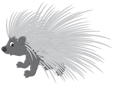 Porcupine stock vector. Illustration of drawing, vector ...