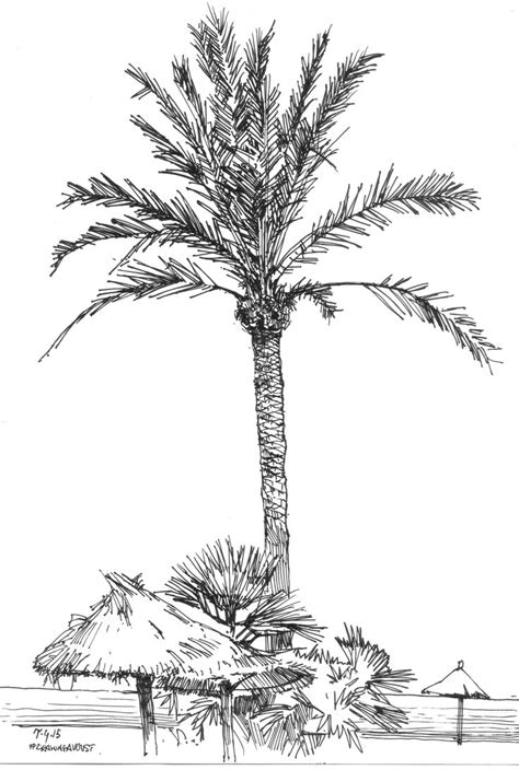 pin  debs mclaughlin  palm trees tree sketches palm