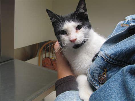 vitamin     deadly problem  cats dr doug