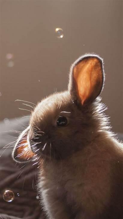 Bunny Iphone Wallpapers Rabbit Bubbles Soap 4k