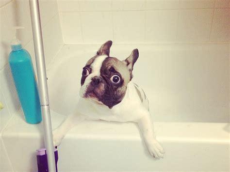 dogs enjoying  bath