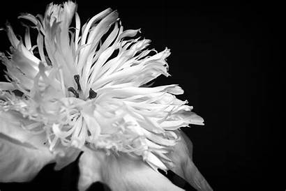Flower Flowers Beauty Lomo Photograph Larger Wallpapers