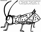 Cricket Coloring Pages Print sketch template
