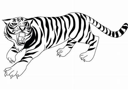 Tiger Coloring Pages Realistic Tooth Clipart Bengal