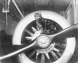 65 best Cats at Sea and in the Air images on Pinterest ...