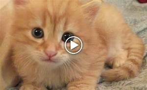 Gattino si perde e viene salvato dalla madre! [VIDEO]
