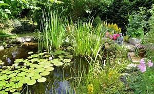 Kleine Gartenteiche Gestalten : gestaltungsideen f r einen naturgarten seerose bepflanzung und teiche ~ Frokenaadalensverden.com Haus und Dekorationen