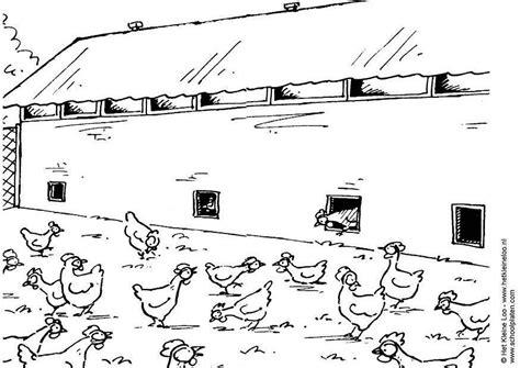 disegno da colorare allevamento  galline cat  images