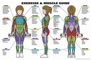 83 Best Images About Anatomy Charts On Pinterest