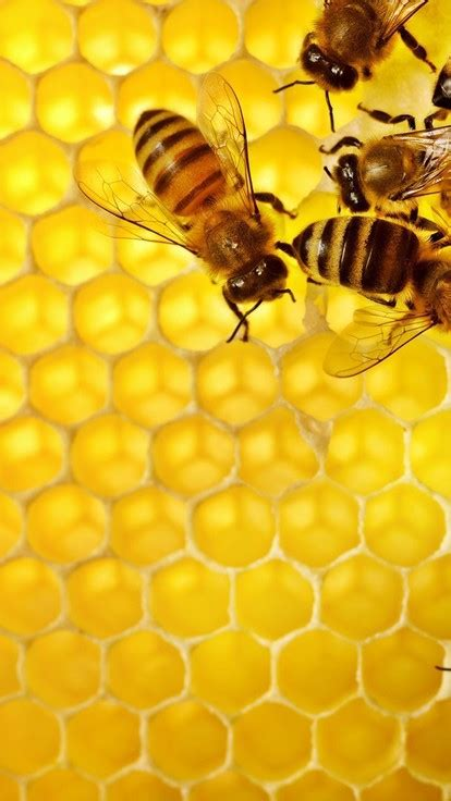 bees honeycomb wallpaper allwallpaperin  pc en
