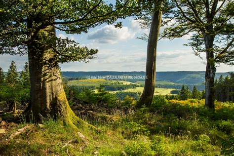 Mit Bilder by Waldlichtung Sauerland Naturfotografie