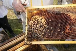 Comment Faire Une Ruche : ruche bourdonneuse l 39 abeille du forez ~ Melissatoandfro.com Idées de Décoration