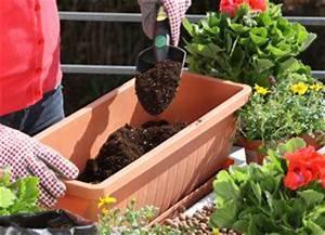 Blumenkästen Bepflanzen Sonnig : anleitung blumenk sten auf dem balkon bepflanzen diy info ~ Frokenaadalensverden.com Haus und Dekorationen
