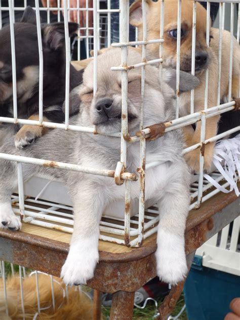 ausländer kaufen immobilien in deutschland alarmierende statistik immer mehr schweizer kaufen illegal importierte hunde vier pfoten