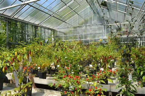 Botanischer Garten Bochum Chili junge g 228 rtner m 246 s scharf baumzeitung de