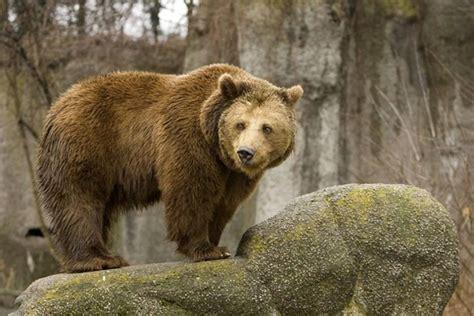 Медведь — кинопоиск
