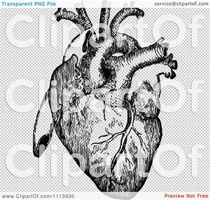 Clipart Vintage Black And White Human Heart