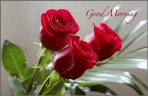 good morning images with red rose | Nice Pics Gallery