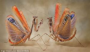 Colorful Praying Mantis and Insects Pictures | Amazing ...