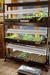 Best Grow Lights for Starting Seeds Indoors (Video indoor gardening lights