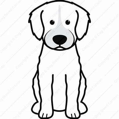 Dog Spanish Water Cartoon Cutout Breed Unique