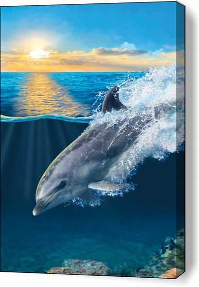 Porpoise Dolphin Dolphins Ocean Canvas Water Sea