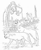 Coloring Pages Coyote Animal Printable sketch template