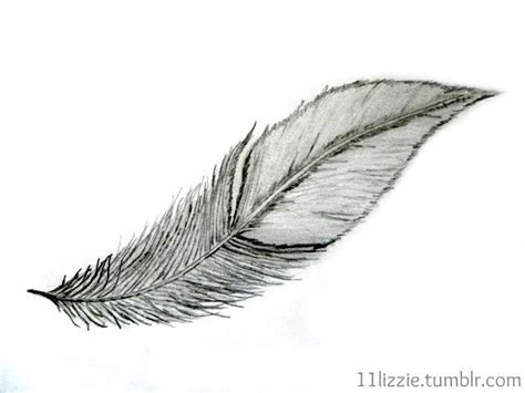 wanna draw  feather  feather drawing drawing  cut