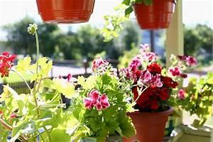 Pflanzen Für Schattigen Balkon : balkonpflanzen f r den schattigen balkon heimhelden ~ Watch28wear.com Haus und Dekorationen