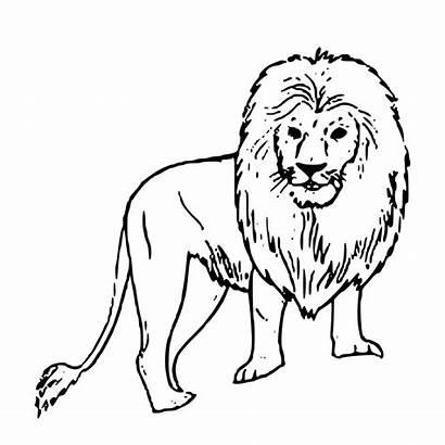 Lion Clipart Clip Graphics Clipartbarn