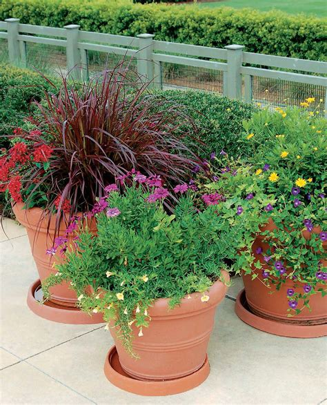 The Ten Commandments Of Container Gardening  Quarto Knows