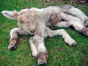 18 best images about Chernobyl Mutations. Animals and ...