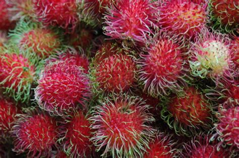 lychee fruit trees that feed and heal leechee lilianausvat