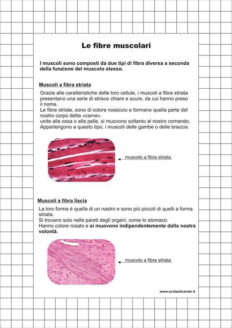Classe quinta scienze: l apparato muscolare schede e verifica da scaricare