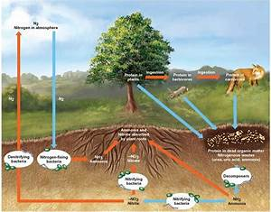 The Cycling Of Materials In Ecosystems U2014biogeochemical