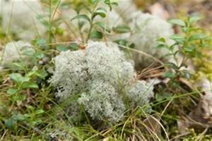 Tundra Biome: Interesting Info About its Plants and Animals