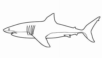Shark Coloring Pages Drawing Outline Fish Colouring