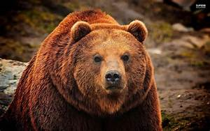 Encounter with a Grizzly in Glacier National Park – Part 2 ...  Grizzly