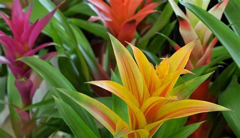 tropical sun plants tropical plants marin ca annual flowers perennial plants