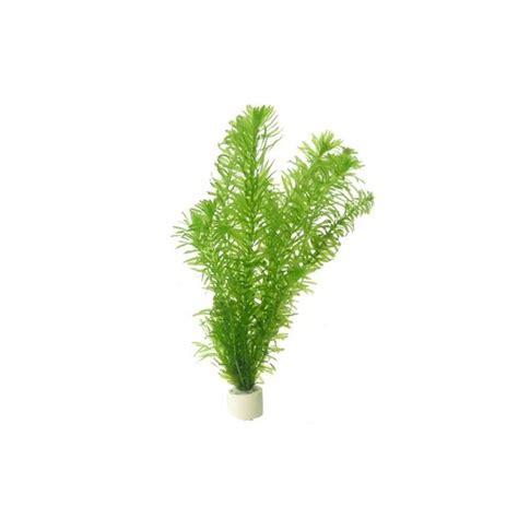 plante pour aquarium d eau froide egerie densa elodea plante oxyg 233 nante en bouquet pour aquarium