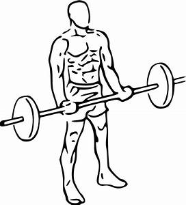 Biceps Curls With Barbell
