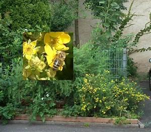 Wann Blüht Flieder : gr nfl chenpflege gartenarbeiten ~ Lizthompson.info Haus und Dekorationen