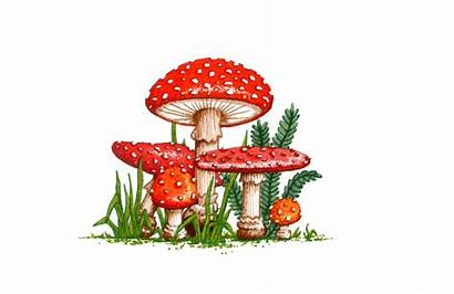 Muscaria Amanita Freepngimg Mushroom Transparent Background